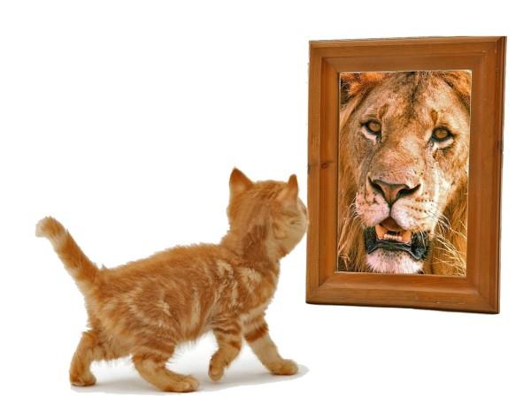 Lion-and-Kitten